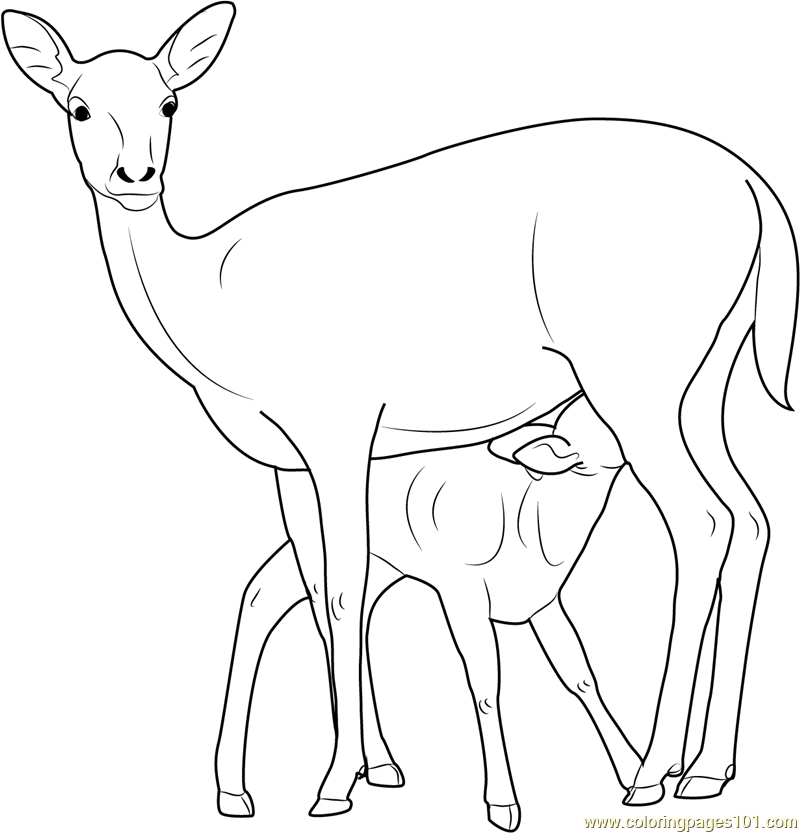 800x833 Mother And Baby Deer Coloring Page