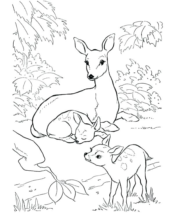 600x734 Baby Deer Coloring Pages