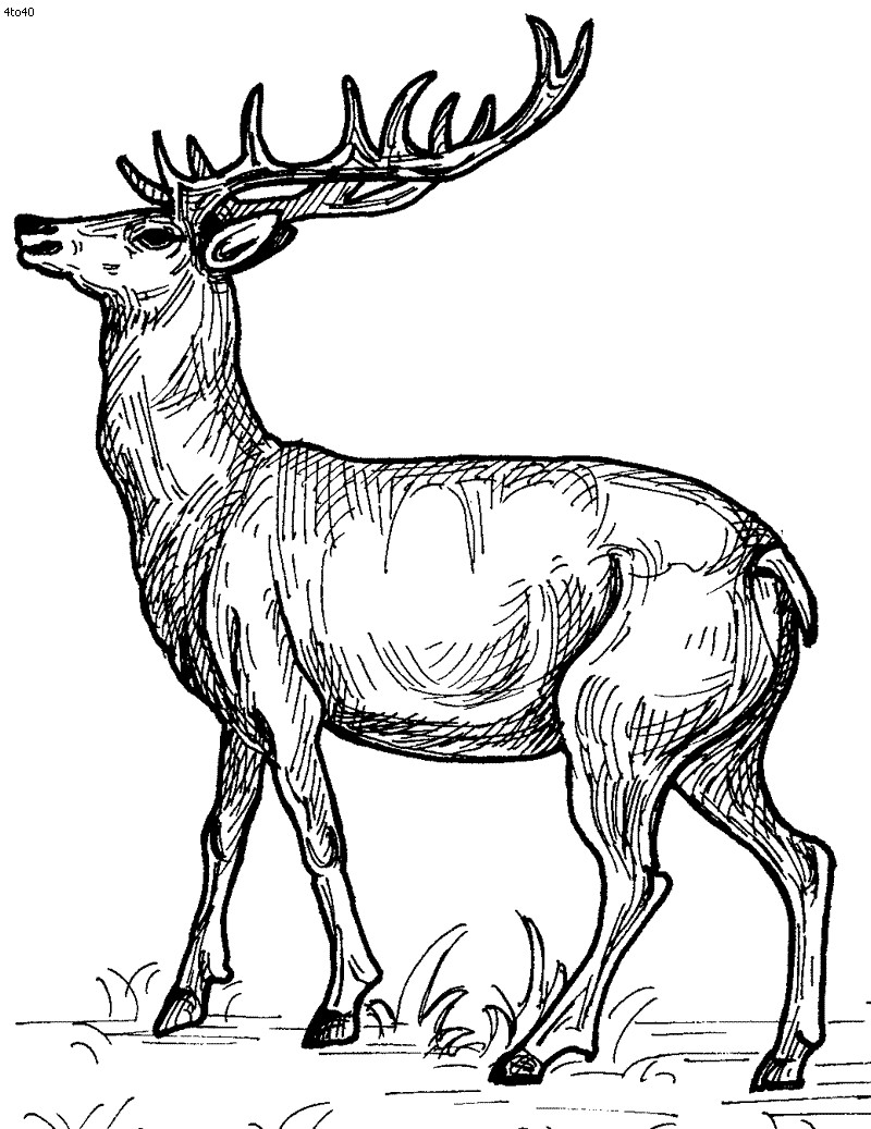 800x1037 Baby Deer Coloring Page Free Pages And Qqa Me