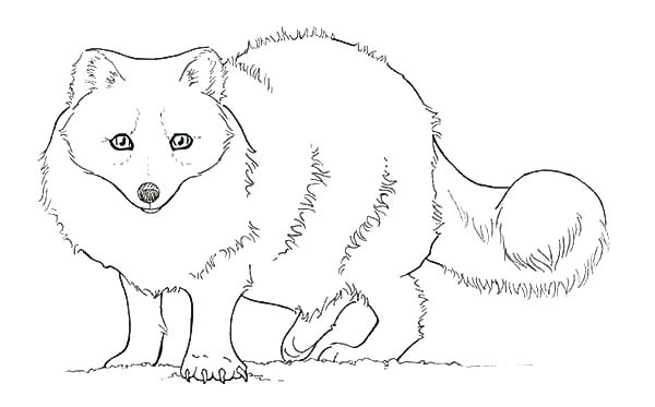 600x373 Printable Fox Coloring Pages Baby Fox Coloring Pages Fox In Socks