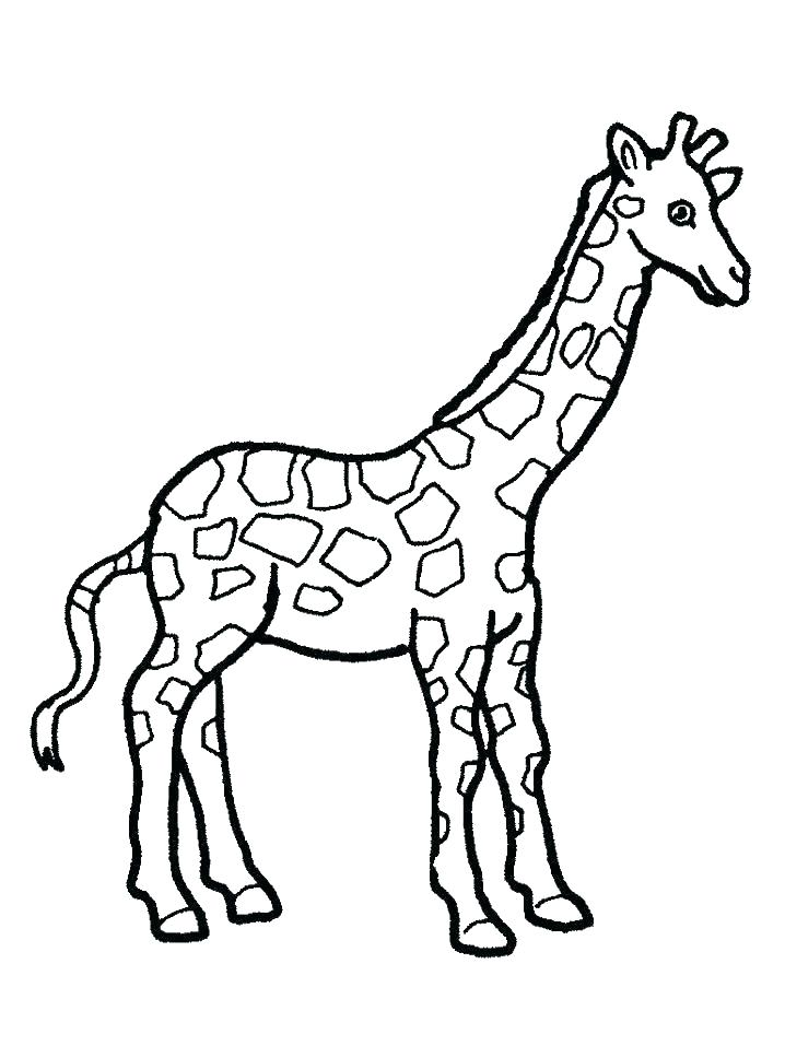 718x957 Coloring Page Giraffe Top Giraffe Pictures To Print Coloring Page
