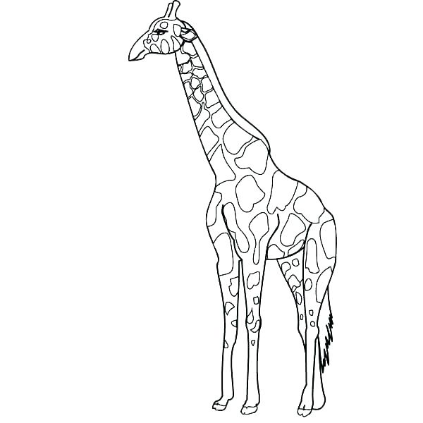 600x600 Coloring Pages Giraffe Coloring Pages Of Giraffes Giraffe Coloring