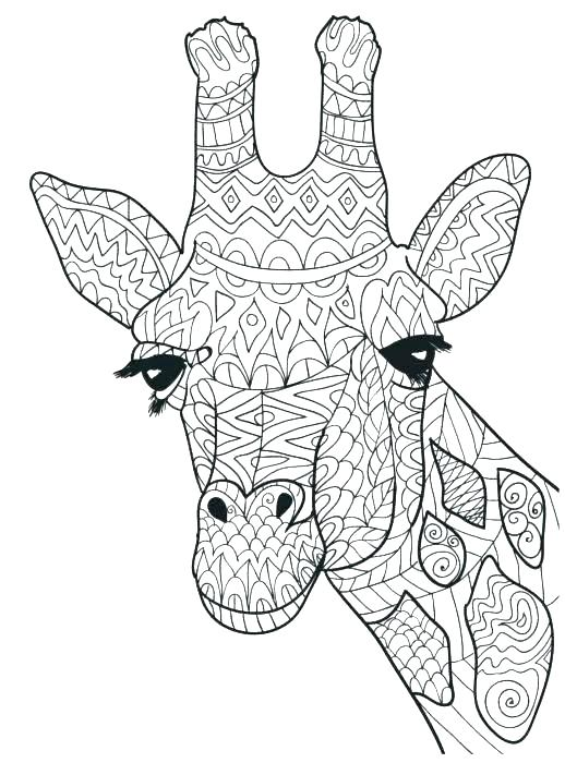 518x700 Coloring Pages Of Giraffes Coloring Pages Of Giraffes Baby Giraffe