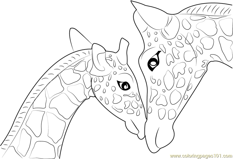 800x546 Mother And Baby Giraffe Coloring Page