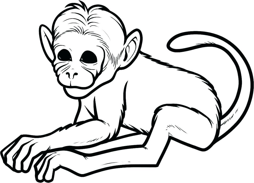 1024x738 Cartoon Monkey Coloring Pages Baby Cartoon Coloring Pages Cartoon