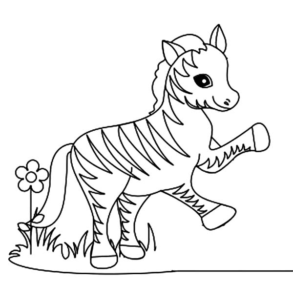 600x619 Funny Little Zebra Coloring Page
