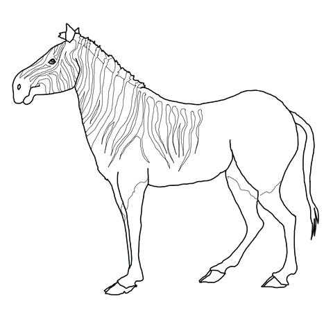 480x451 Zebra Coloring Page Baby Zebra Coloring Pages Baby Zebra Coloring