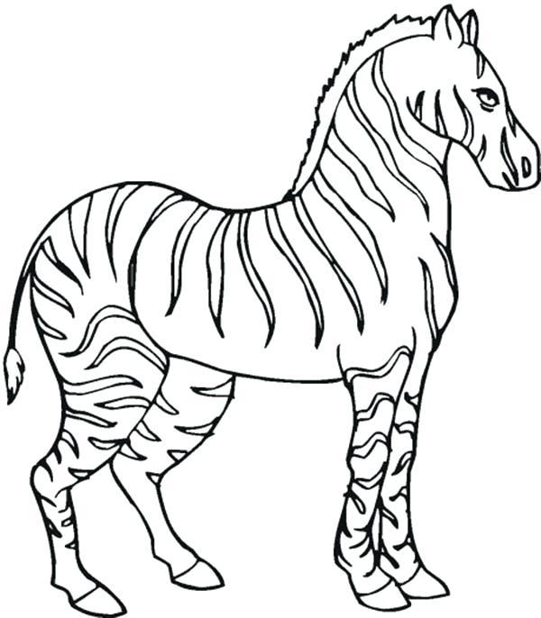 600x686 Zebra Coloring Pages Stallion Zebra Coloring Page Baby Zebra