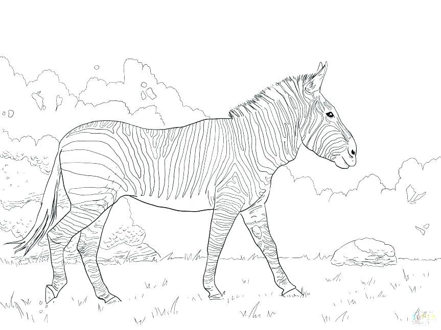 863x647 Zebra Coloring Pages Zebra Color Page Zebra Without Stripes