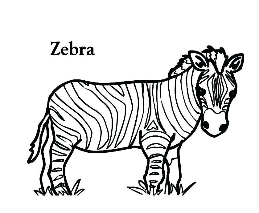 840x692 Zebra Coloring Pages Zebra Coloring Pages For Adults Zebra