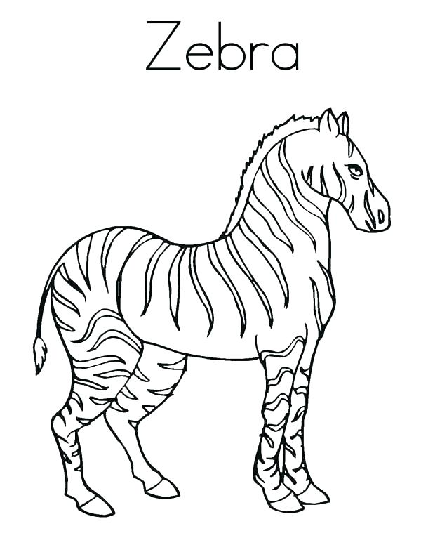600x776 Zebra Coloring Pictures Zebra Coloring Page For Kids Zebra