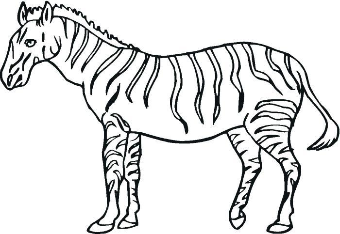 700x483 Zebra Coloring Sheet Zebra Coloring Page Super Baby Zebra Coloring