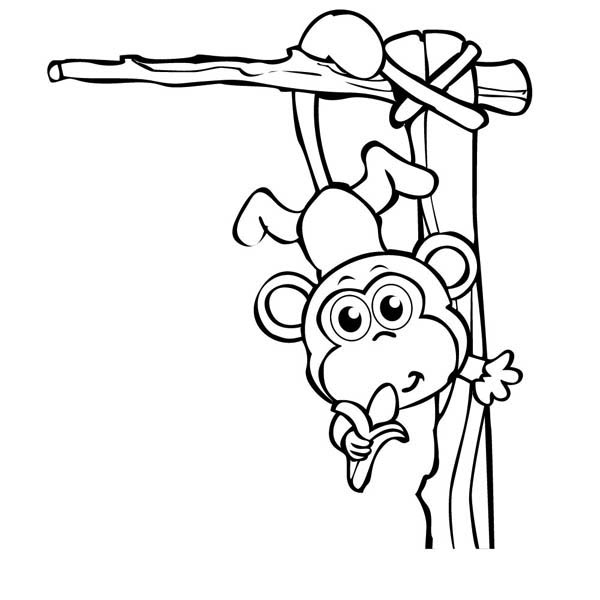 600x600 Cute Baby Monkey Hanging On Its Tail Eating Banana Coloring Page
