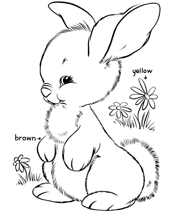 670x820 Easter Bunny Coloring Pages Bluebonkers