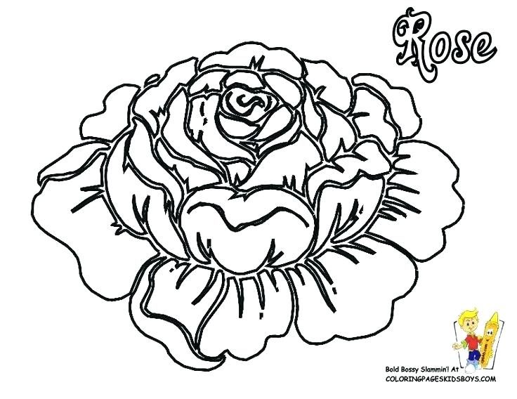 736x568 Coloring Pages Roses Flowers Skulls And Flower Page Accidental Ros