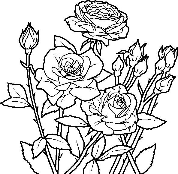 593x577 Garden Coloring Pages Of Flowers Roses