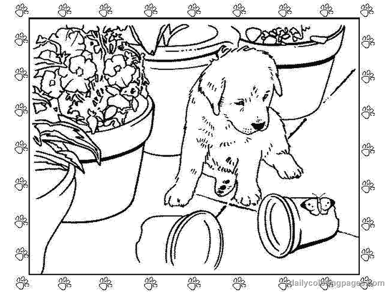 800x600 Golden Retriever Puppies Coloring Pages