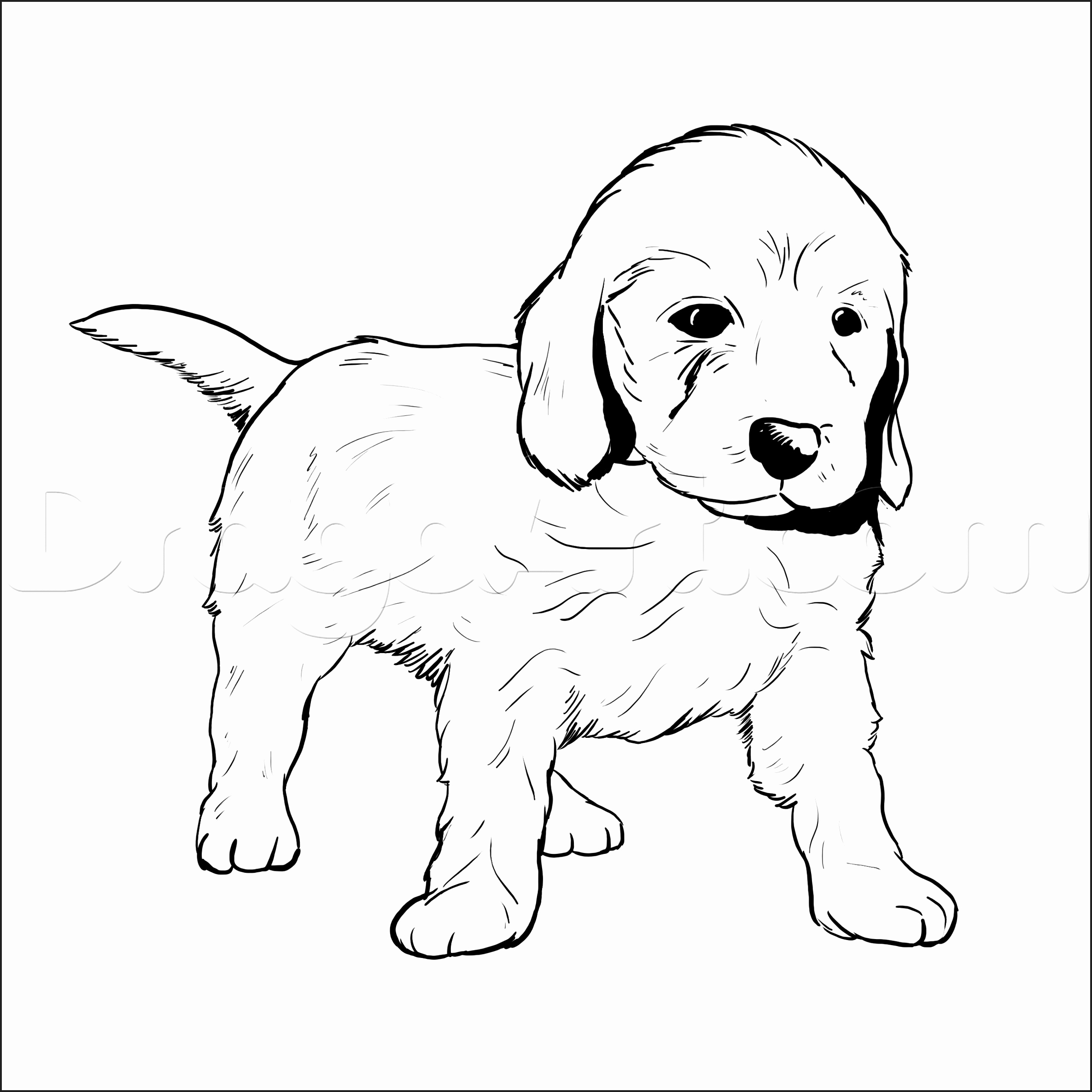 2371x2371 Golden Retriever Puppy Coloring Pages