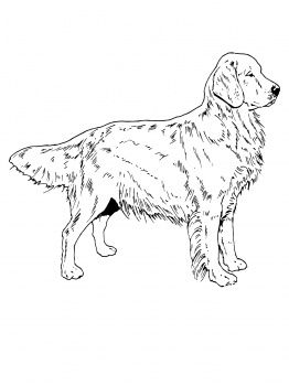 262x350 Dog Color Pages Printable Golden Retriever Dog Coloring Page
