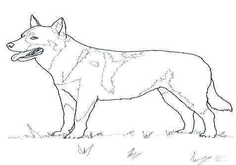 476x333 Golden Retriever Coloring Pages Boxer Puppy Coloring Pages Stock