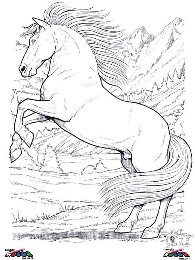 Coloring Pages Of Horses Rearing
