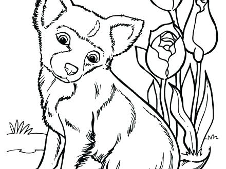 440x330 Husky Puppy Coloring Pages Husky Coloring Page Husky Family