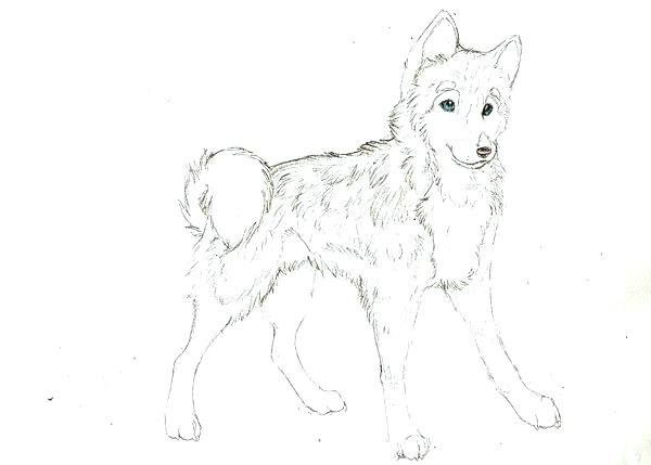 600x429 Husky Puppy Coloring Pages Husky Coloring Pages Husky Coloring