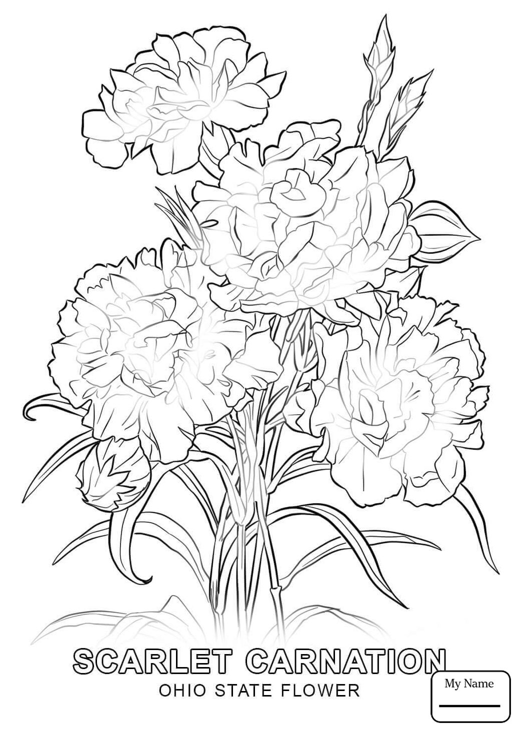 1040x1469 Ohio State Bird Countries Cultures Coloring Pages Red Carnation