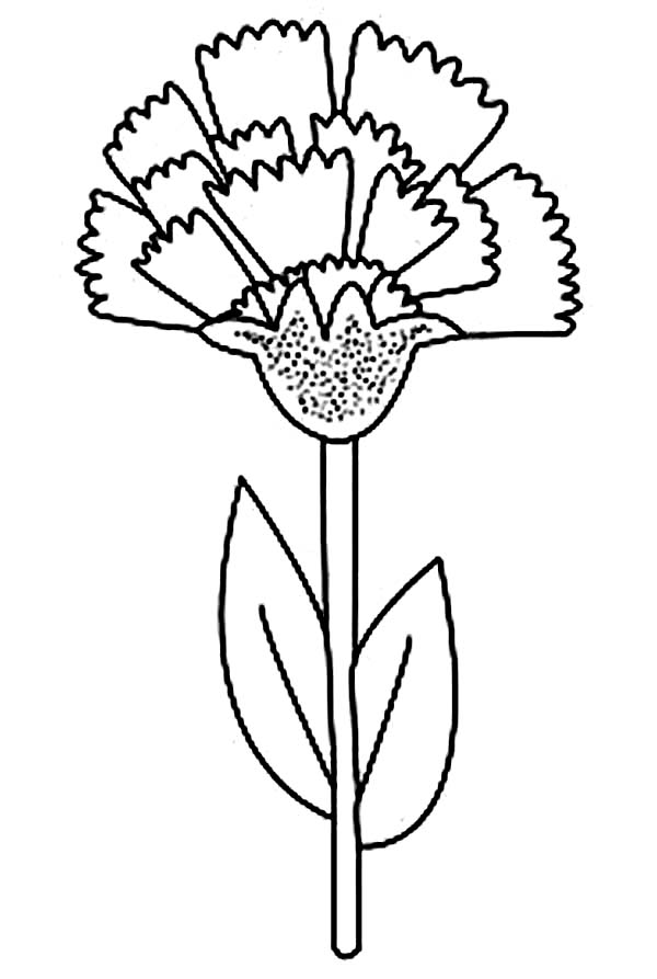 600x893 Ohio State Flower Carnation Coloring Page Ohio State Flower