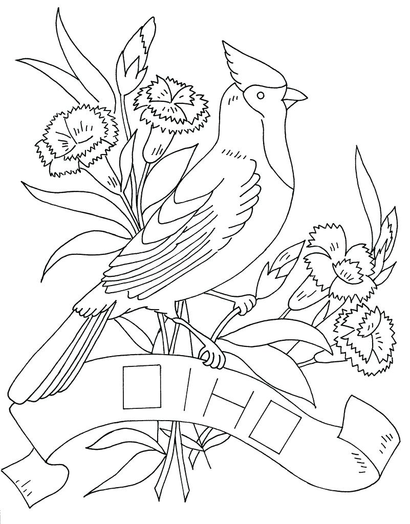 801x1024 Coloring Page Ohio State Coloring Pages Bird And Flower Photo