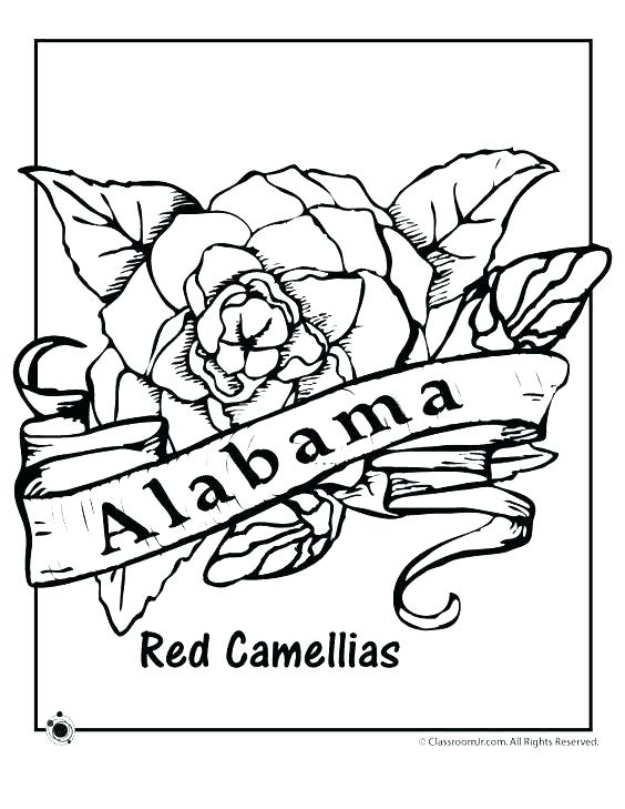 564x729 Coloring Pages Ohio State State Tree Coloring Page Coloring Pages