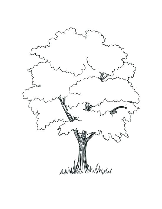 550x711 Family Tree Coloring Page Trees For Coloring Family Tree Coloring