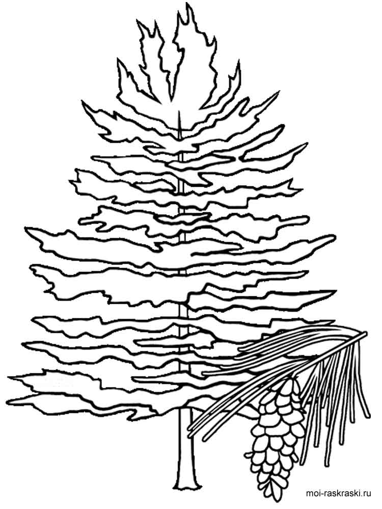 750x1000 Fir Tree Coloring Pages For Kids Free Printable Fir Tree Coloring