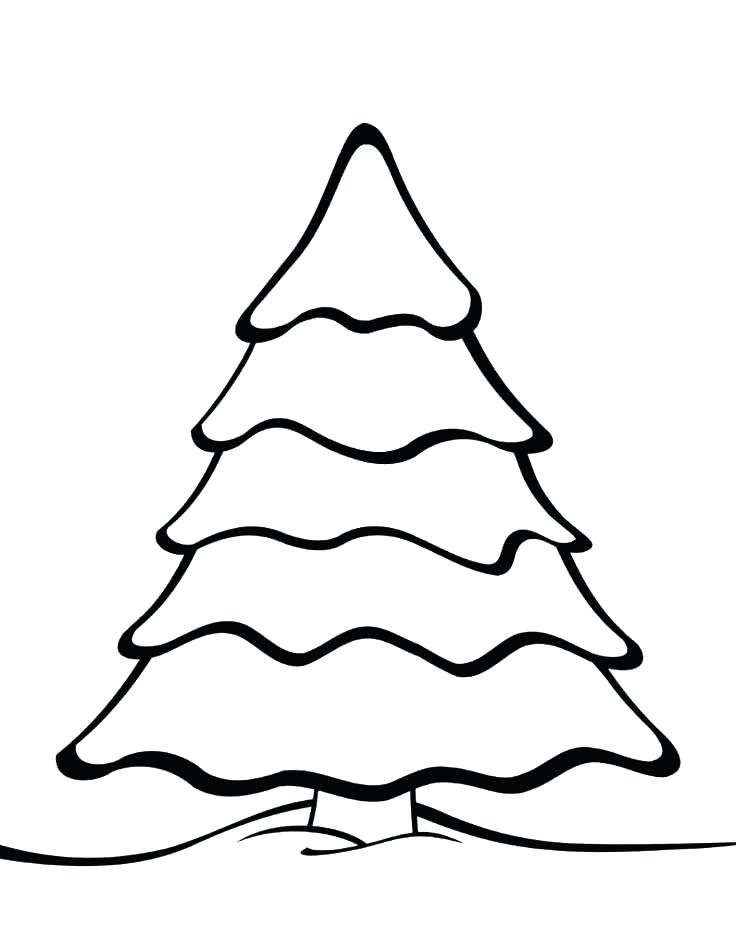 736x952 Pine Tree Coloring Pages Free Printable Tree Coloring Pages