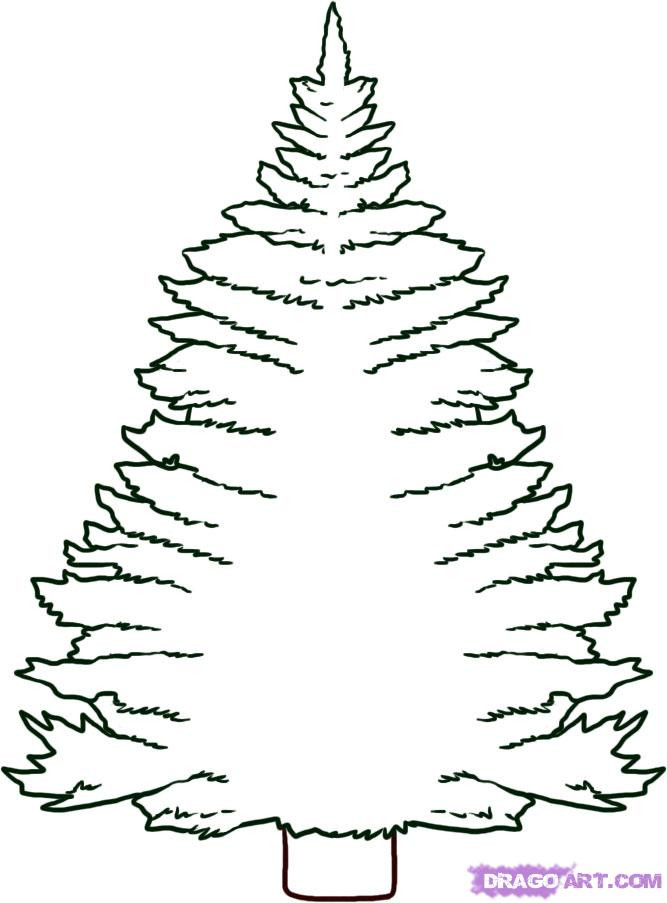 667x903 Pine Tree Coloring Pages Fresh Chrismas Tree Drawing