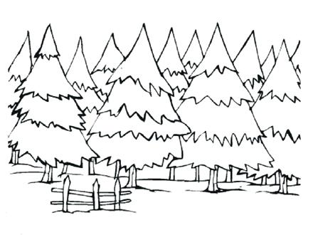 440x330 Pine Tree Coloring Pages Pine Trees Coloring Pages Coloring Pine
