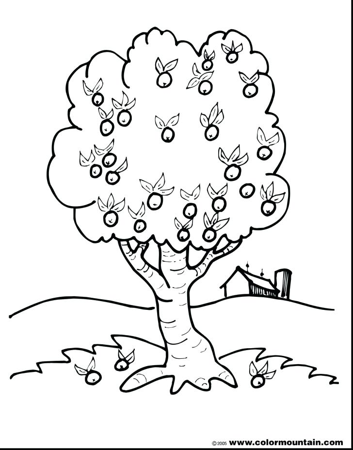 728x928 Apple Tree Coloring Page Apple Tree Coloring Page With Wallpapers