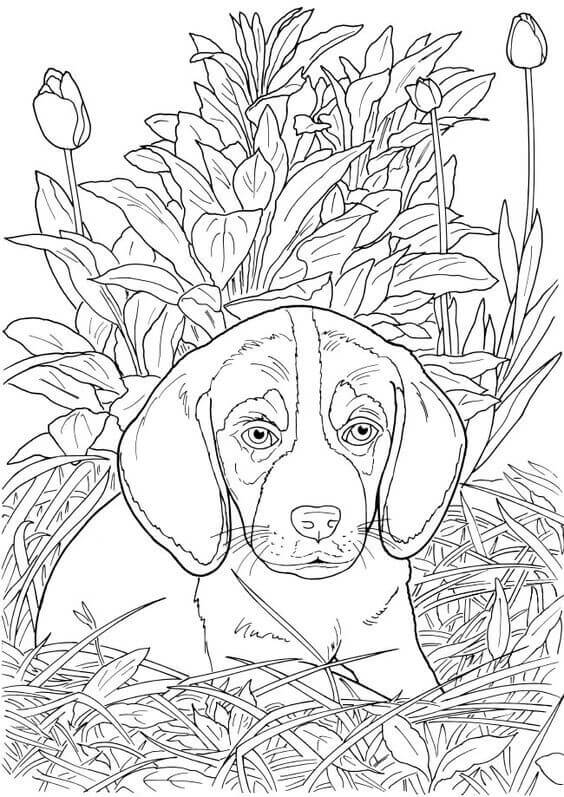 Coloring Pages Of Realistic Dogs