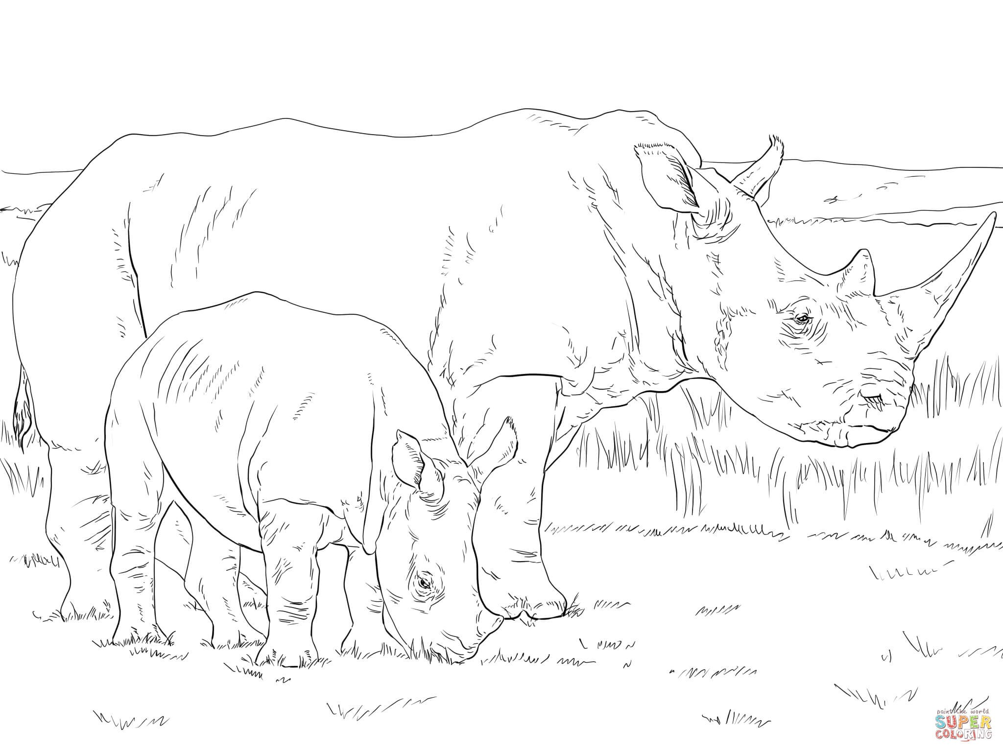 2048x1536 Realistic Rhino Coloring Pages Best Of White Rhino Mother And Baby