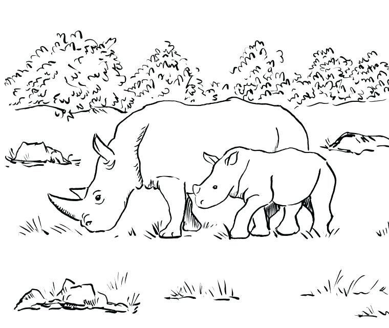 760x641 Rhino Coloring Page Rhino Coloring Page Baby Rhino Coloring Page
