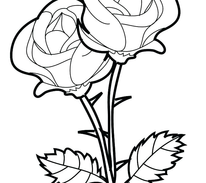 678x600 Coloring Pages Of A Rose Rose Color Pages Rose Rose Flower
