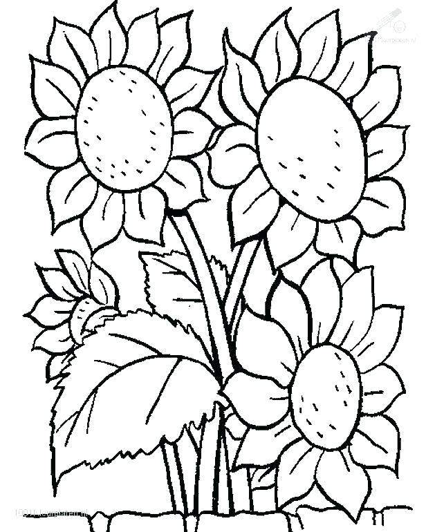 616x770 Coloring Pages Of Flowers Free Printable Coloring Pages Flowers