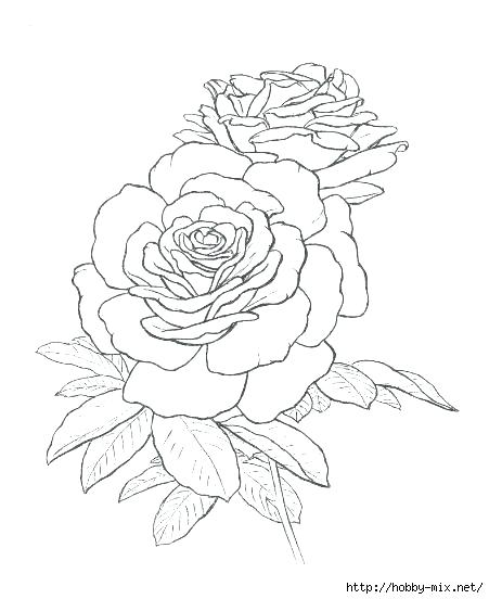 451x552 Coloring Pages Of Roses Coloring Pages Roses Roses To Color