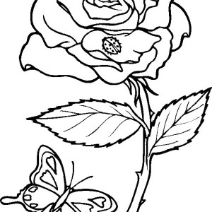 300x300 Rose From Garden Coloring Page