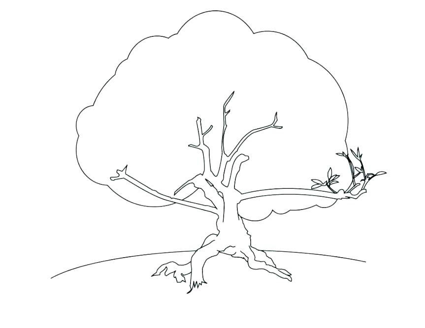 863x667 Coloring Pages Of Trees Coloring Pages Of Trees Without Leaves