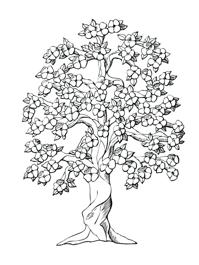 688x917 And Family Tree Coloring Pages Printable Colouring To Together