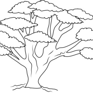 300x300 Oak Tree With So Many Branch Coloring Page Color Luna