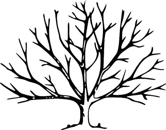 550x430 Printable Tree Without Leaves Coloring Page Trees