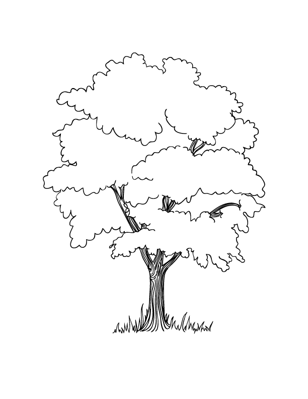 612x792 Simple Tree Coloring Page