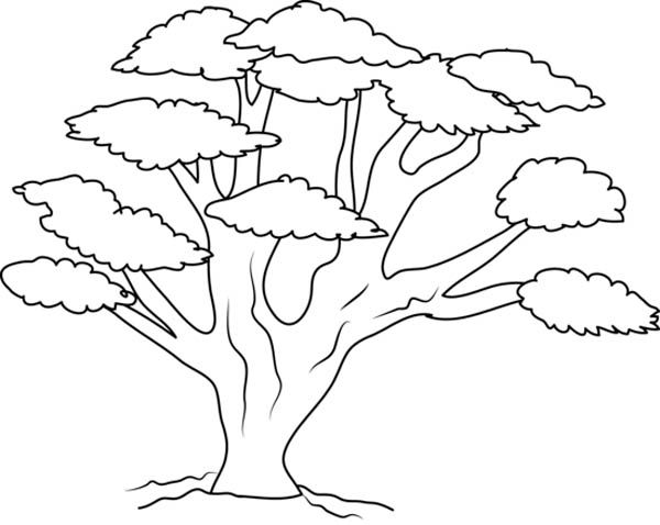 600x478 Tree Coloring Pages Tree Branch Coloring Pages Kids Coloring Pages